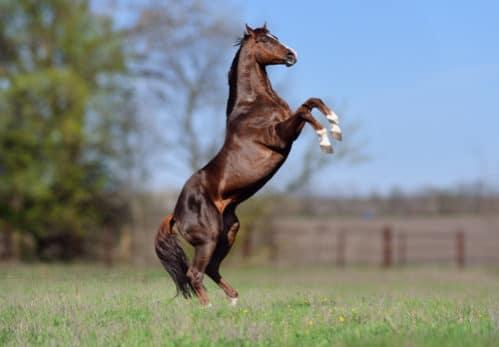 セクレタリアト史上最強馬 映画にもなった偉大な馬を6つの知識と共に ...