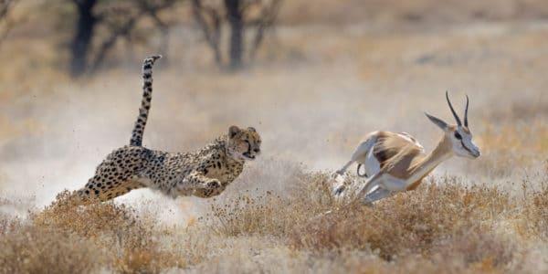 「動物 速い」の画像検索結果